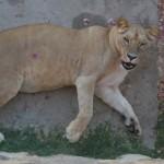 Zoo-vrt u Lisabonu